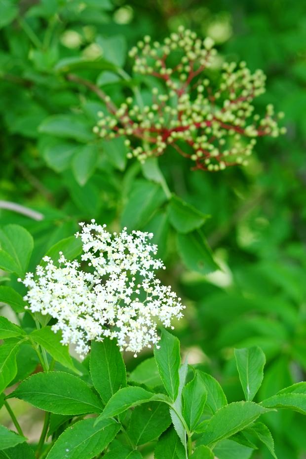 fiori da essiccare