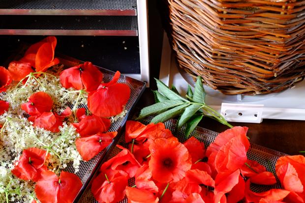essiccatore per fiori