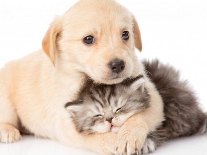 benessere cani gatti
