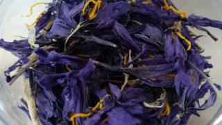 fiori di zafferano essiccati
