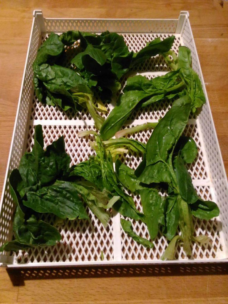 spinaci essiccati