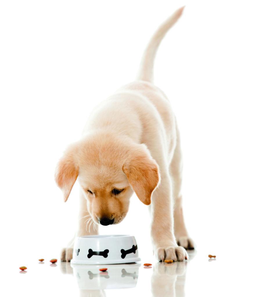 cibo essiccato per cani e gatti