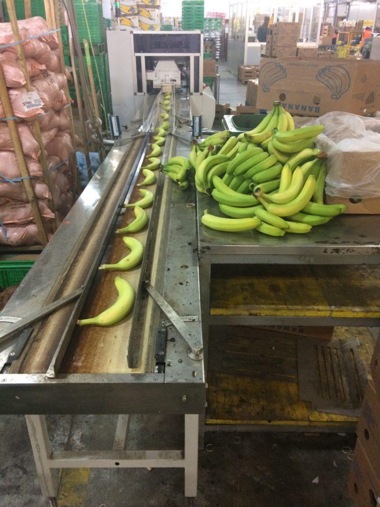 selezione banane single