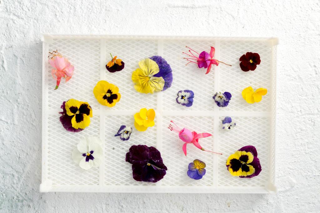 violette candite essiccate